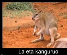 La eta kanguruo